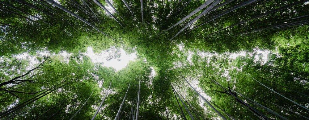 MEET | Maxime Renaudin, Tree-Nation